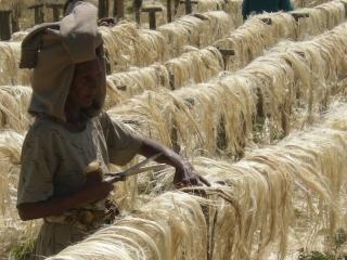 Sisal-Factory Ethiopia 2008