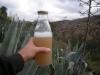 15-aguamiel-harvest2