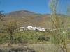 Velefique - El Valle del Ficus